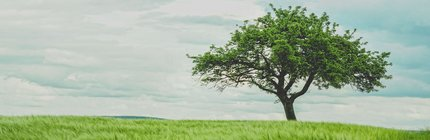a leafy green tree sits alone in a green field